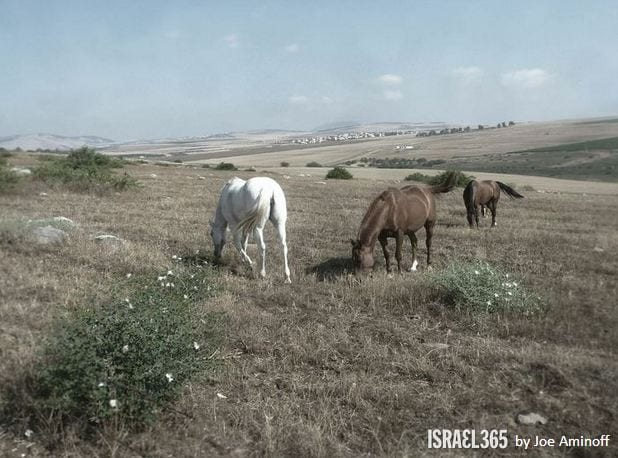 gilboa christian singles • christian singles • christian classifieds: graphics  mount gilboa is one of the three mountains on the east of the plain of esdraelon,.