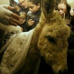 On Mt. Zion, a Donkey to Redeem Israel is Blessed in Rare Biblical Ritual [PHOTOS]