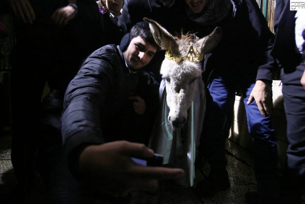 Redeeming of the firstborn donkey. (Courtesy Behadrey Haredim)