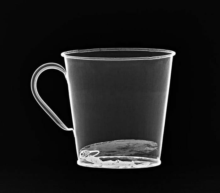 An X-ray of the Auschwitz mug with gold ring (Photo: JNi Media)