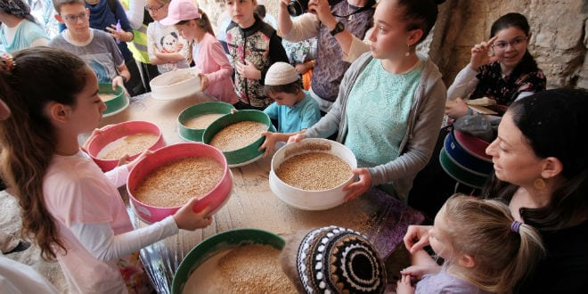 Women and children sift through the Omer (barley) harvest. (Photo: Abba Richman)