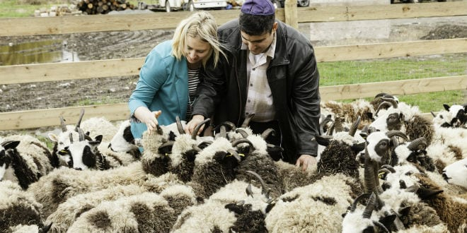 Fulfilling Ezekiel's Prophecy, Jacob's Biblical Sheep Arrive in the Promised Land