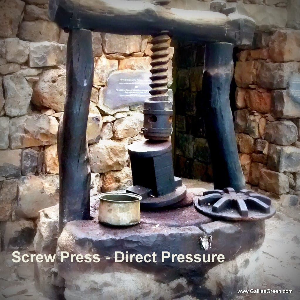 A screw press forces direct pressure on the olives releasing the sweet oil. (Photo: Galilee Green)