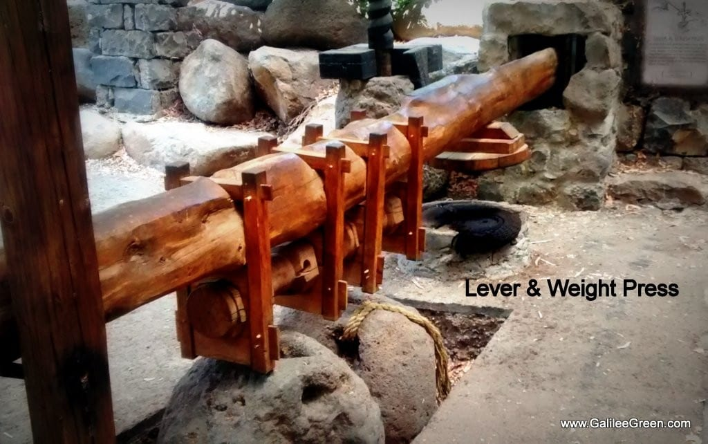 A lever and weight press to squeeze the oil out of the olives. (Photo: Galilee Green)