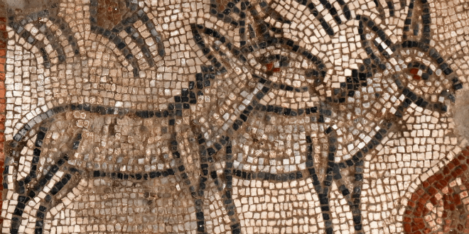 Donkeys in Noah's ark mosaic from Huqoq Synagogue. (Photo: Jim Haberman/UNC Chapel Hill).
