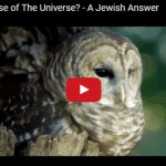 What is the Purpose of the Universe? – A Jewish Answer
