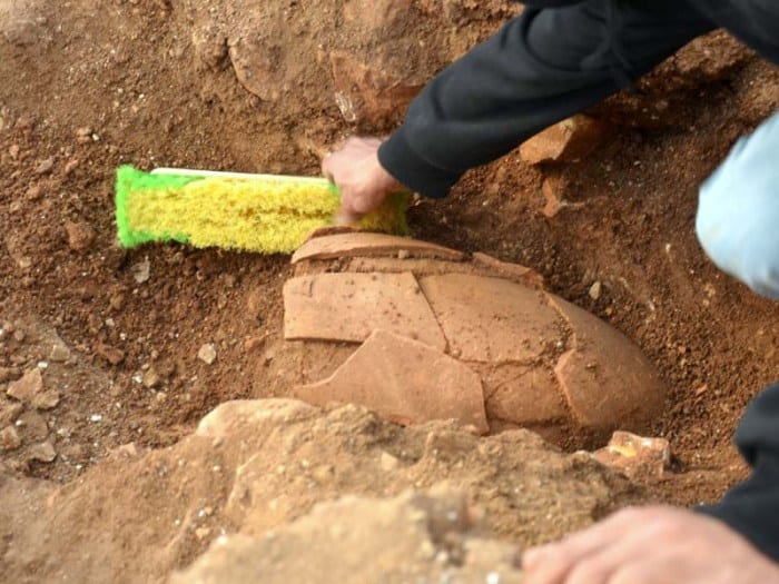 A 2,000 year old jar as it was discovered in the field. (Yoli Shwartz, courtesy of the Israel Antiquities Authority.)