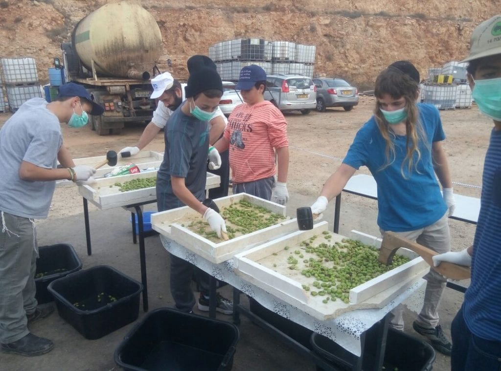 Volunteers use plastic mallets and wear face masks so the olive oil remains ritually pure. (Courtesy Yaki Savir)
