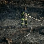 As Fires Decimate Israel's Forests, BIN and Israel365 Call on Supporters to Help Fund 1,000 Trees