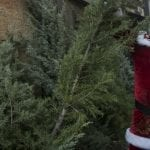Spreading Holiday Cheer, Jerusalem Distributes 150 Free Christmas Trees
