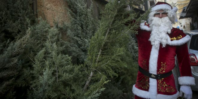 Jerusalem Distributes 150 Free Christmas Trees for Holiday
