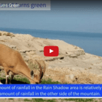 The Judean Desert Turns Into a Green Oasis!