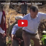 Israel365 and HaYovel Tours Plant Trees in Judea