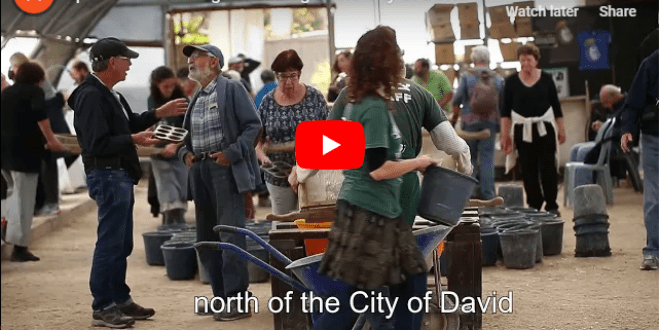 Special Archaeological Finding in City of David