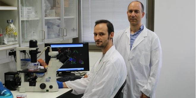 Hebrew U Researchers Discover Promising Treatment for Aggressive Brain Tumors