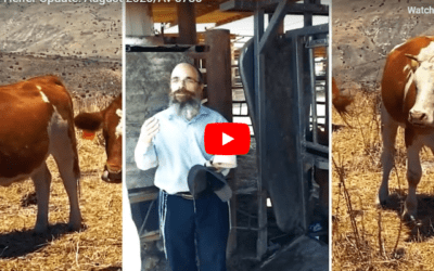 Rabbi Inspects Red Heifer in Secret Location in Israel for Use in 3rd Temple