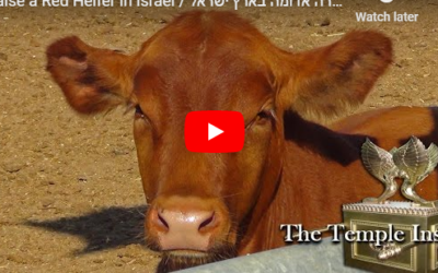 A Red Heifer was Accidentally Discovered in Colombia [Watch]