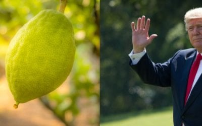 Trump Admin. Bypasses Travel Restrictions so Jews could get Citrons for Sukkot