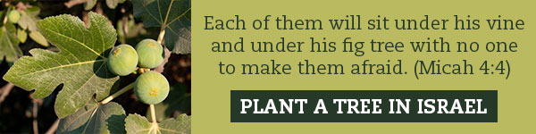 """Each of them will sit under his vine and under his fig tree with no one to make them afraid."" (Micah 4:4). Plant a tree in Israel."