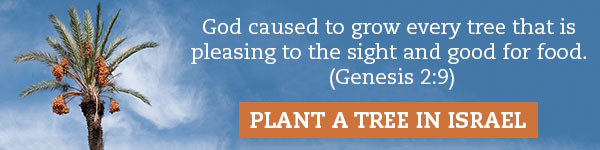 """""""God caused to grow every tree that is pleasing to the sight and good for food."""" (Genesis 2:9). Plant a tree in Israel."""